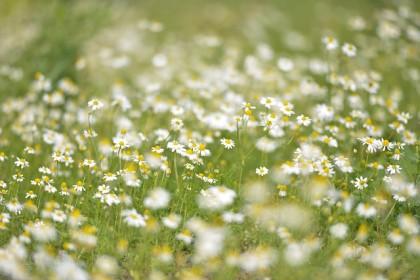 flowers-602989_640