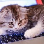 なぜアメブロじゃなくてWordPressでブログを書くことにしたの?