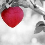 タロットカードの恋人と悪魔に見る「愛と欲望」。
